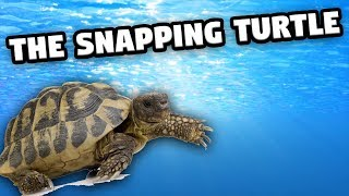 Sunshine The Snapping Turtle