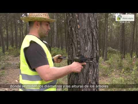 go-monte-digital-para-la-gestión-forestal-sostenible