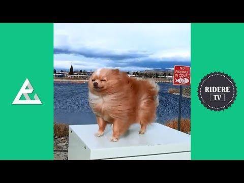 PROVA A NON RIDERE #30 - DIVERTENTI VIDEO ANIMALI COMPILATION
