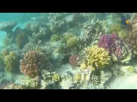 Snorkeling in Egypt Marsa Alam HD GoPro 3 BE