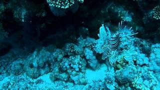 Красное море. Подводное видео.(Египет, Красное море, Шарм-аль-Шейх, Ноябрь 2010, Рыбы., 2011-08-03T06:02:03.000Z)