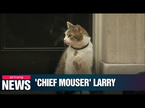 Chief Mouser Larry May Be Ousted From Downing St As Pm