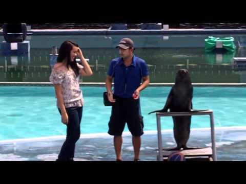 Manila Ocean Park - Sea Lion Show - May 23, 2011