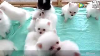 可愛小狗的有趣影片
