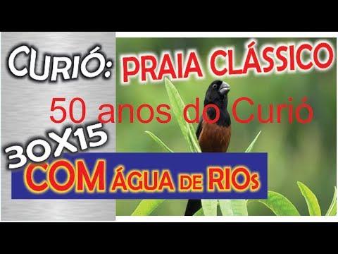#4 Selo 50 Anos Canto Do Curió Praia Grande 30 Minutos De Canto 15 Minutos De Som De água De Rio