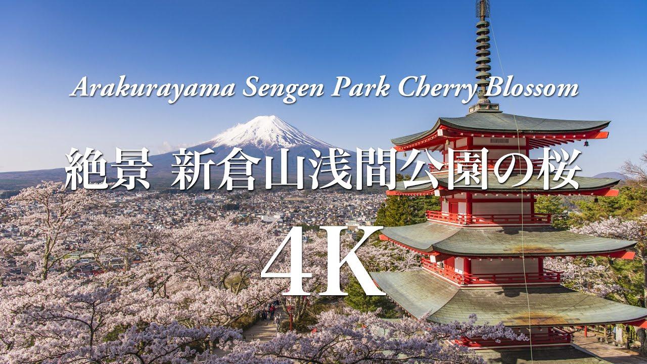 4K] 絶景 新倉山浅間公園の桜 Ar...