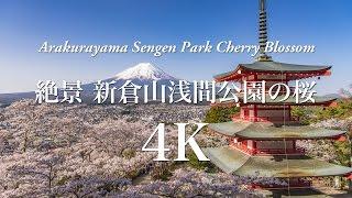 [4K] 絶景 新倉山浅間公園の桜 Arakurayama Sengen Park Cherry Blossom