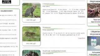 Редкие животные за миллионы! Природоохранная прокуратура требует закрыть сайт по продаже диких кошек