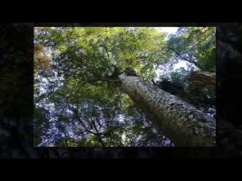 Top 14 most amazing forest in New zealand