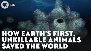 How Earth's First, Unkillable Animals Saved the World