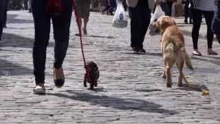 Perfect Puppy Uk Residential Dog Training - Preview For 2014