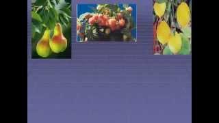 Строение семени растений.AVI