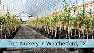 Tree Nursery Weatherford TX Brazos River Trees