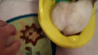 Mocha's Potty Training