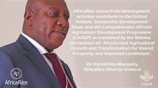 AfricaRice teaser video : Transforming lives and livelihoods in Africa