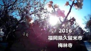 2016 福岡県久留米市 梅林寺 花見