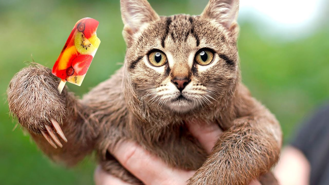 These 30 hybrid animals are a mix of super cute and