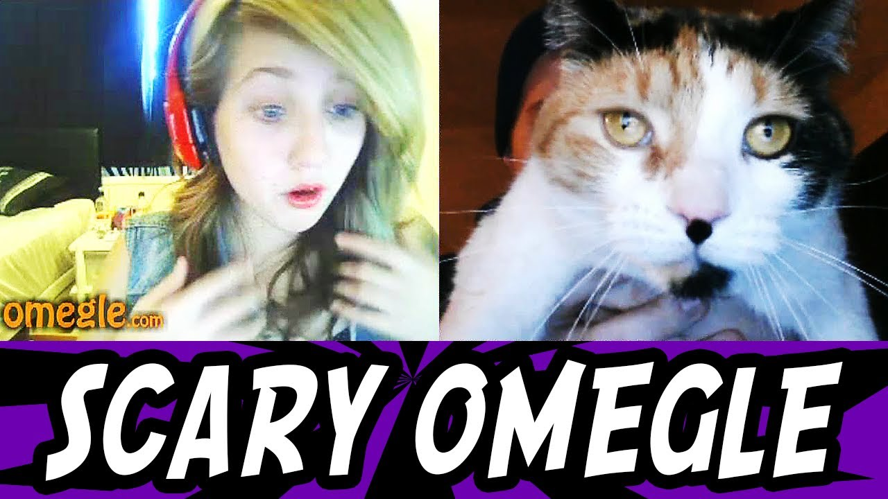 Scary Prank On Omegle Funny Cat Scare YouTube - 16 funniest cat tweets 2016