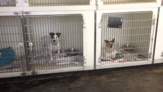 North Clwyd Animal Rescue Grant Application for Support Adoption for Pets