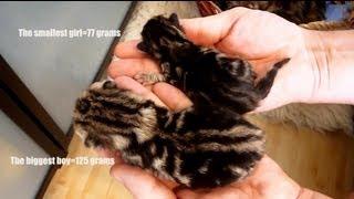 Cat Coco gave birth 6 cute kittens