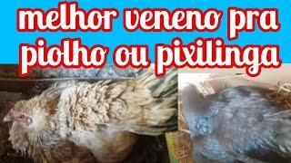 PIOLHO (pioinho) NAS GALINHAS  - COMO ACABAR COM ELES!