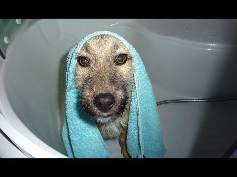 Homeless Dogs Heartwarming Reaction To Taking A Bath For The First Time