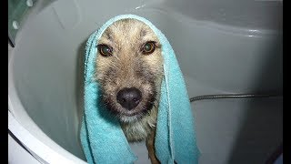 homeless-dogs-taking-a-bath-for-the-first-time
