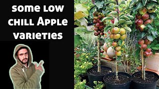 Gambar cover Apple variety low chill.Apple variety for hot climate.Apple variety for hot weather.warm zone Apple.