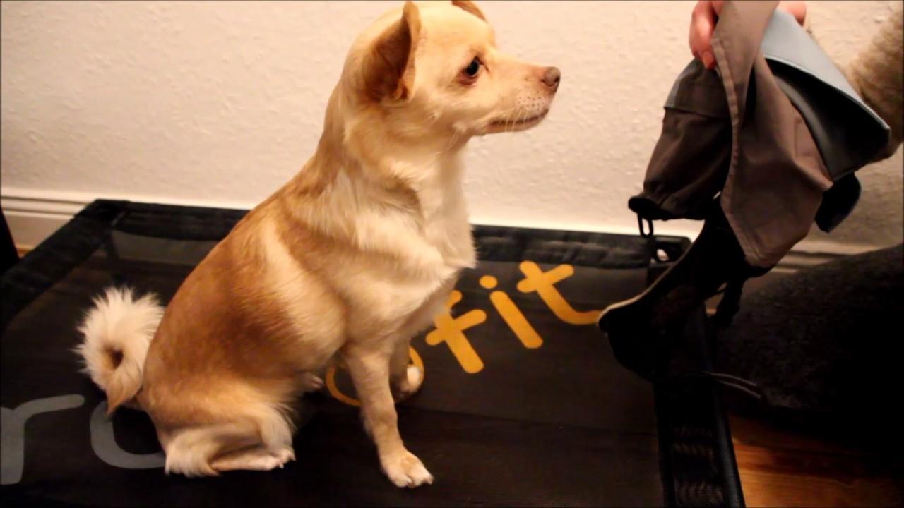 Dem Hund einen Mantel anziehen - YouTube