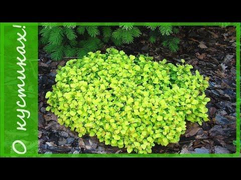 альпийской фото растение горки для