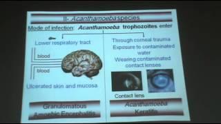 Dr.Azaa - Protozoa 6 - Free living Amoeba