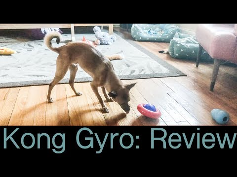 Kong Gyro | Dog Toy Review