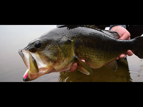 OTW Shorts - Cape Cod Bass