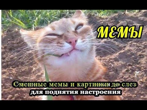 Самые Смешные Мемы-Просто ржака. - YouTube
