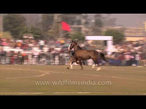 Nihangs riding on two horses- Ludhiana