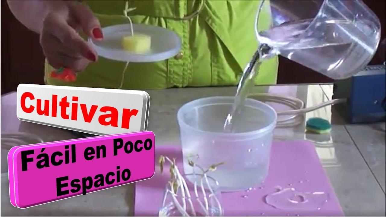 Como sembrar plantas sin tierra vida a lo verde youtube - Como plantar marihuana en casa paso a paso ...
