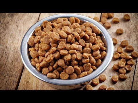 Производство корма для кошек и собак как бизнес идея