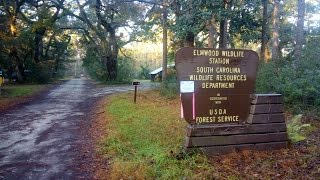 Free Camping in McClellanville SC at Elmwood Hunt Camp