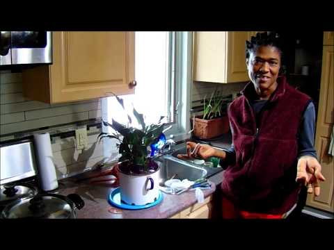 Using Watering Globe Effectively For Potted Plants