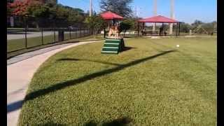 Coco The German Shepherd Dog Training At Tamarac Park
