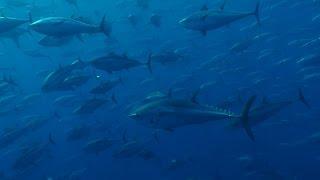 AEGEAN SEA in APNEA, the 2nd PLACE in DEEP VIDEO AWARDS 2015