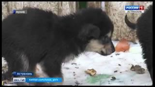 Строительство в Астраханской области приюта для бездомных животных отложено до осени