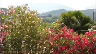 Camping Le Soleil de Provence - Vaison la Romaine, au pied du Mont Ventoux
