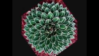 Power Flower  - Camille