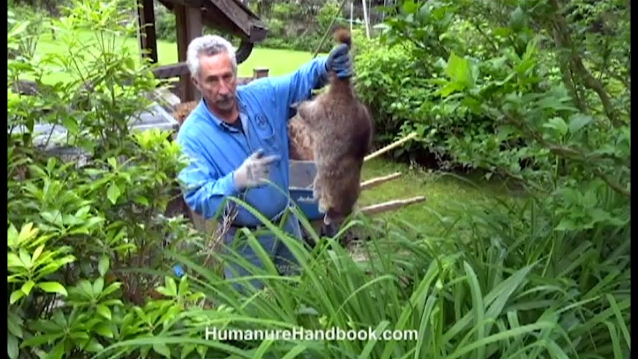 composting animal mortalities in your back yard youtube