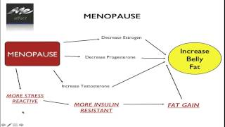 Menopause Belly. What causes it and how to beat it.