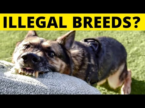 Dog Breeds that Are ILLEGAL to Own