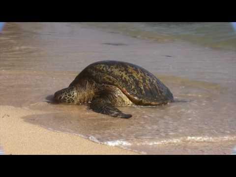 Luxurious Kauai Vacation Rental at the Beachfront Kiahuna Resort in Poipu