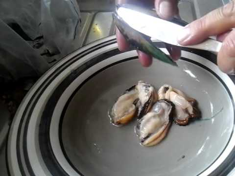 How to shell a mussel