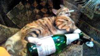 кошка курит